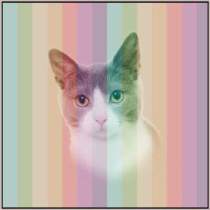 Katt med striper panel 38 x 38 cm